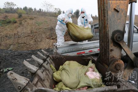 竹山县391公斤非法销售猪肉被无害化处理!