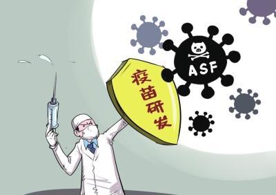 """各类""""非洲猪瘟疫苗""""研究介绍"""