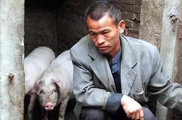 我是昌图养猪人却养不了猪?何去何从?