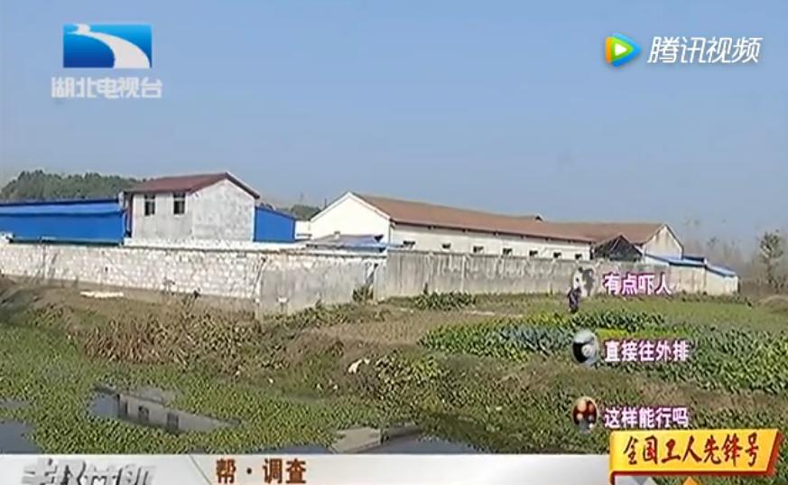 帮·调查:村民生活苦不堪言 屠宰场排污惹祸