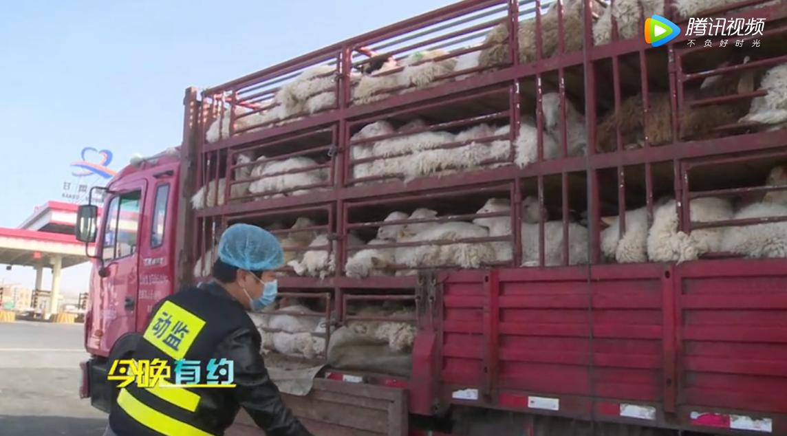 四部门联合执法打好非洲猪瘟交通管理战