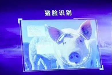 连载五:中国智能养猪白皮书(2018)