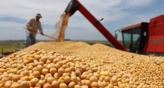 海关总署:中国11月大豆进口538.4万吨,10月为692万吨