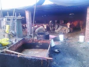 贵州省民政厅发布紧急通知:全面禁止餐厨废弃物饲养生猪