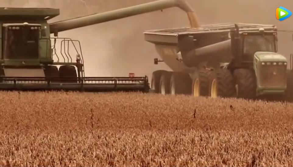 美国大豆遭禁止后,销量不降反增,原因是他们在搞鬼!
