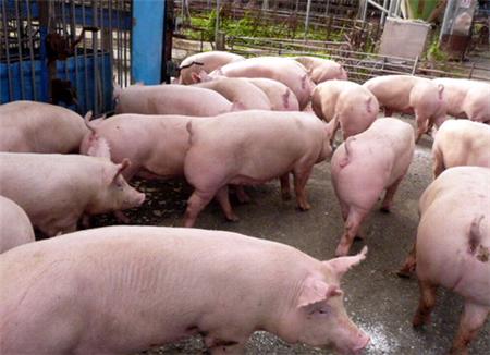 罗牛山:11月销售生猪1.82万头,环比减少24.37%