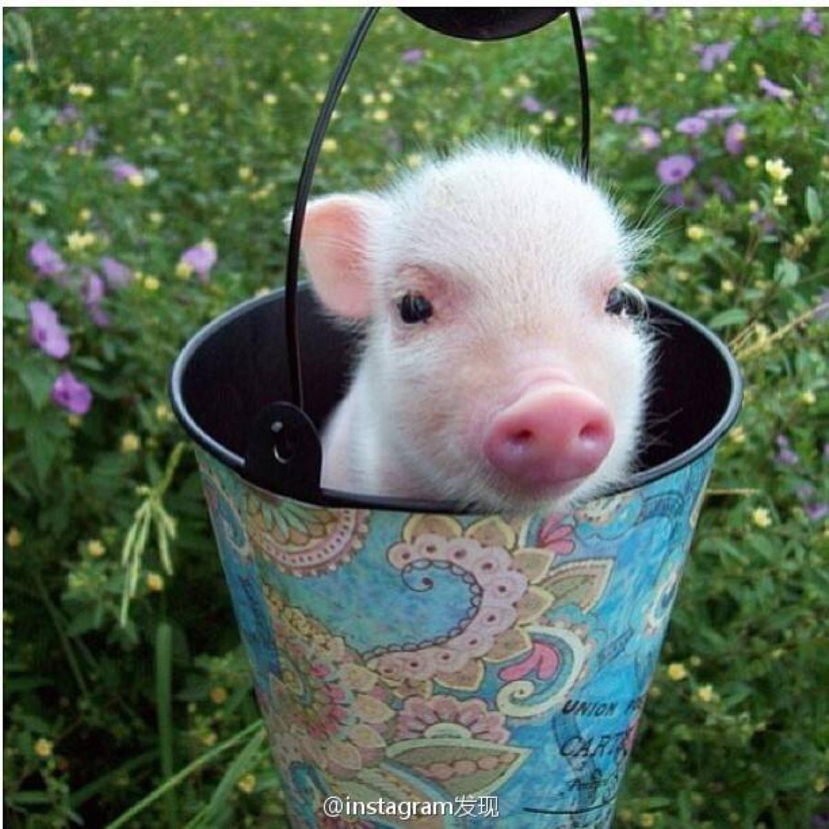 2018年12月15日(10至14公斤)仔猪价格行情走势