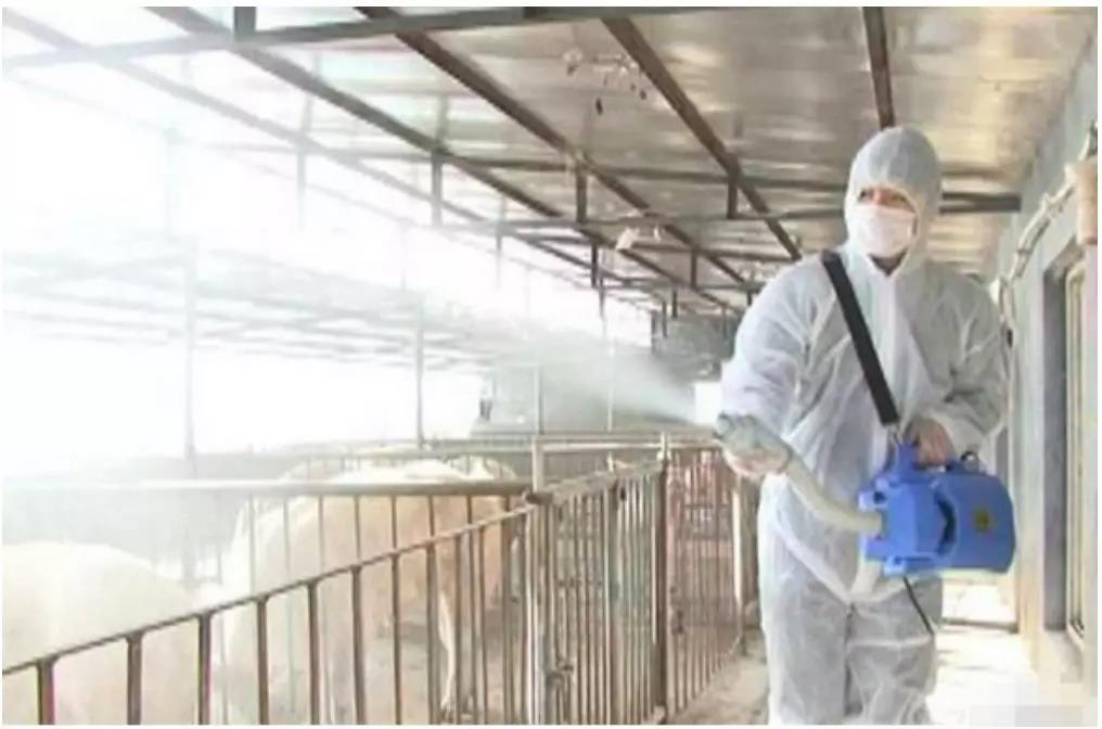 注意!你猪场生物安全或存在巨大漏洞,危险正在逼近
