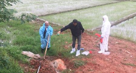 农业农村部要求统计2年内无害化处理生猪数,将加强无害化处理建设?