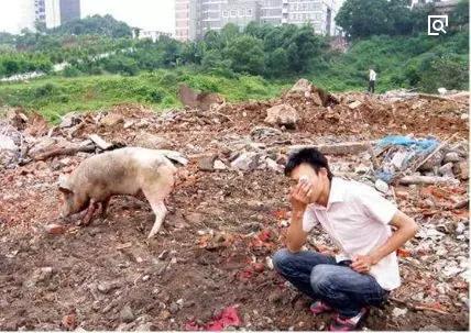 """疯狂的疫情""""殃及""""生猪供应,外媒预计明年中国将大量进口美国猪肉高达50万吨"""