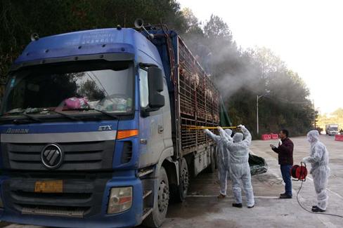 电击扑杀一日2起!江西跨省违规调运生猪及产品在福建被截获