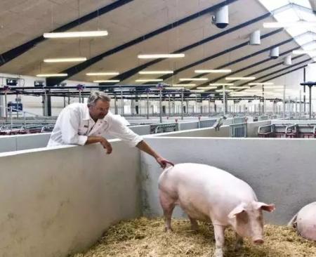 欧洲大中型猪场阻断疫情的三道防线