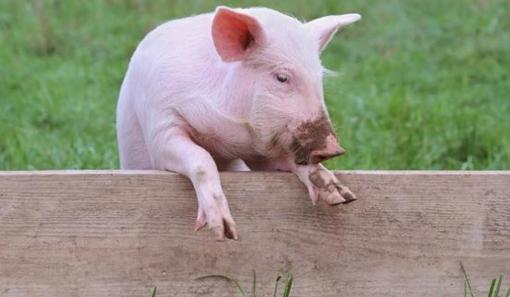 上海:2019年前完成畜禽养殖废弃物资源化利用的目标