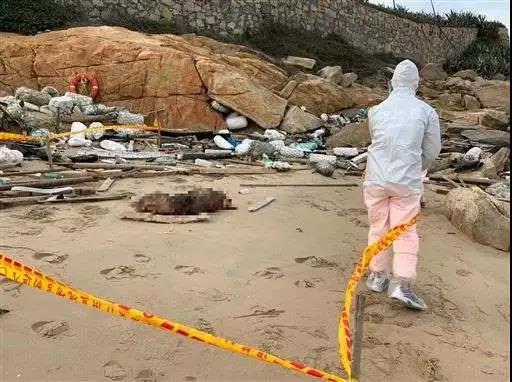 台湾农委会:金门沙滩上的死猪,今日确诊为非洲猪瘟阳性