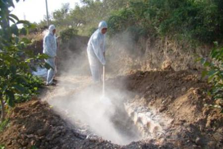黑龙江亚欧牧业疫情暴发已有一个月以上?