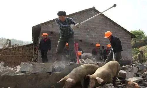 """""""禁养""""来袭,养殖场快干不下去,农民反问这个问题,说到心坎上"""