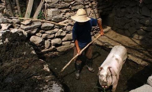 假如农村中小养猪场都没有了,中国的养猪业会怎么样?