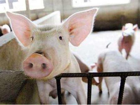 2019年1月14日(10至14公斤)仔猪价格行情走势