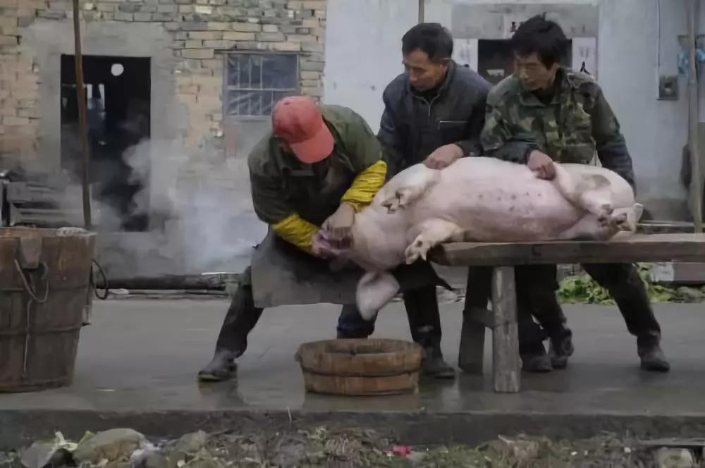 三名屠户非法杀猪500余头,还网购猪肉检疫章