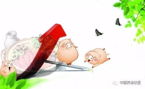春节前生猪市场:要不要出栏你得先看这一点!