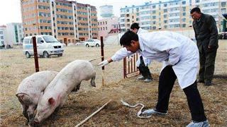 严防非瘟,福建已排查生猪场点97.6万个