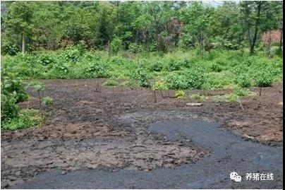 养猪场粪污资源化利用要注意这些事项