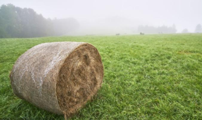 安井食品回应疑似检出非洲猪瘟:加工行业检测能力存不足 事件影响存不确定性