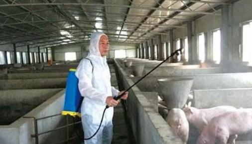 非洲猪瘟阻击战半年全扫描