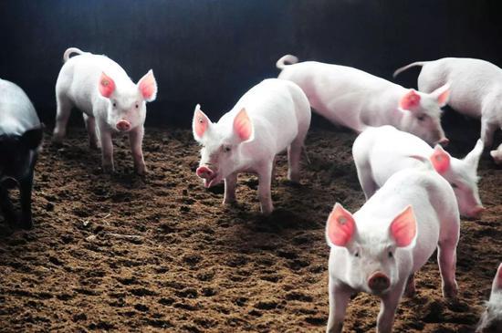 2019年2月1日(10至14公斤)仔猪价格行情走势