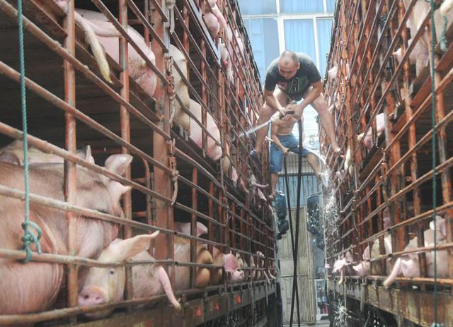 养猪第一股巨亏背后:曾投资6万家沙县门店,豪掷5亿给儿子玩电竞
