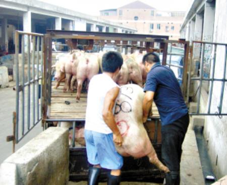 2019年02月05日全国各省生猪价格内三元价格报价表