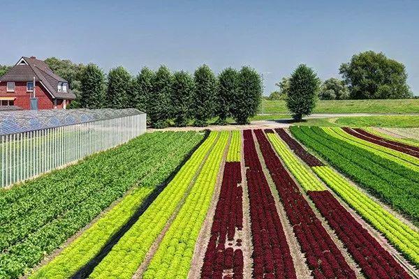 """六大""""共享农业""""模式,很多人正靠它""""偷偷""""发财,赶紧看看吧!"""