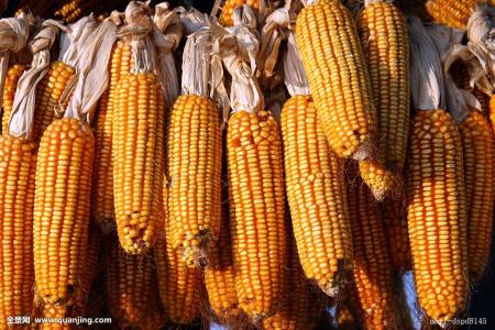 2019年02月18日全国各省玉米价格及行情走势报价表