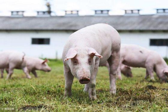扩大产能!唐人神冲击160万生猪出栏目标