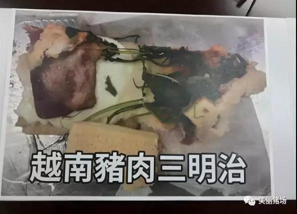 广西北海两养殖区发生非洲猪瘟疫情 台农委会从越南旅客猪肉三明治中检出非洲猪瘟
