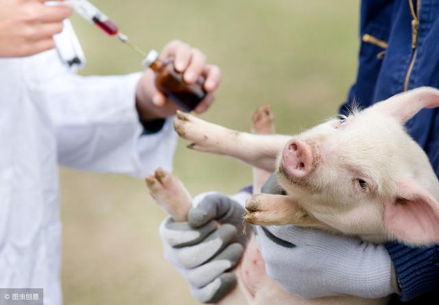 仔猪副伤寒病的临床症状有哪些,如何准确诊断与有效防治?