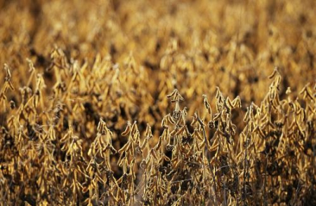 美国农业部长:不会因为中国采购美豆而做出让步