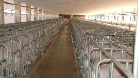 非瘟现象:猪场越大风险越大,行业开始洗牌,资本市场疯狂涌入!