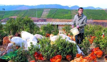 国家扶持家庭农场!家庭猪场或迎来创业高潮