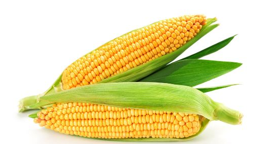 春暖花开日 玉米筑底时,价格逐渐回暖