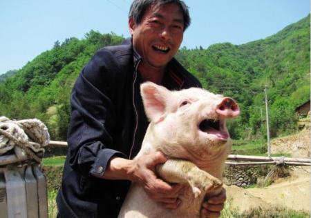 饲料销量下滑了 散户退出了 猪肉概念股涨飞了
