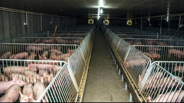山东省德州市投入580万元防控非洲猪瘟
