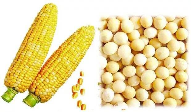 2019年黑龙江大豆生产者补贴每亩300元左右,比玉米高200元