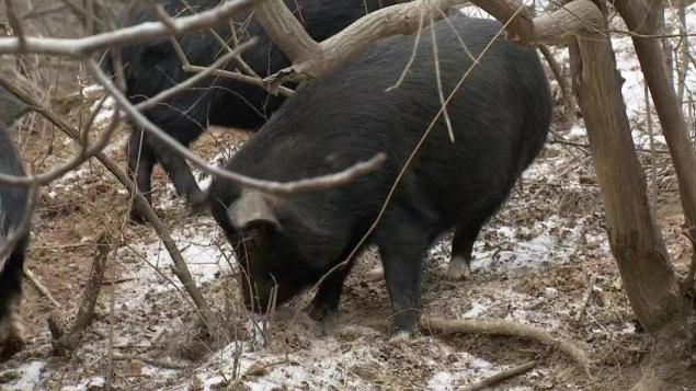 贷款500万养猪,2年后,他在这片荒山上一年卖出1000万销售额