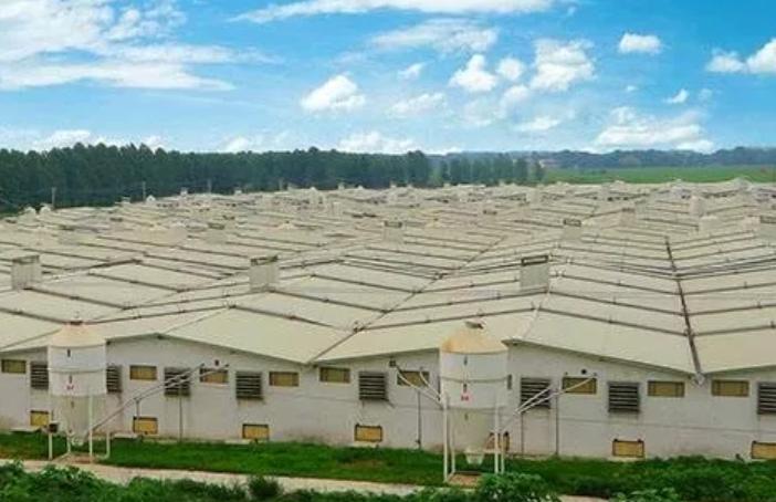2千亿温氏和千亿牧原逆市投资猪业