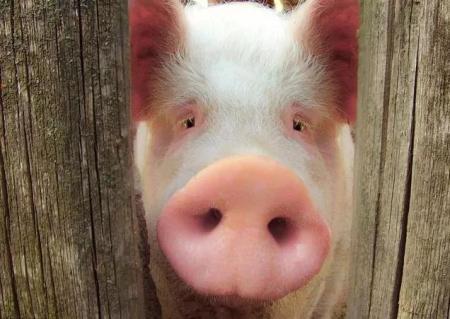 猪轮状病毒病高发季,养猪户千万做好这些防治措施