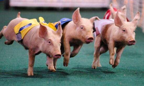 农业农村部:猪价高峰时同比或涨超80%