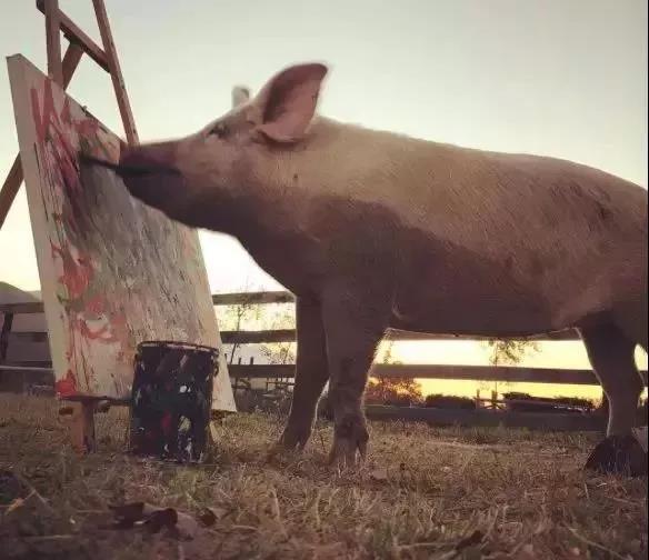 全球唯一会画画的猪,一幅画卖好几万,人送称号:猪加索