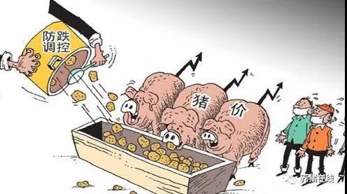 猪价上涨迅猛,政府是否会调控?