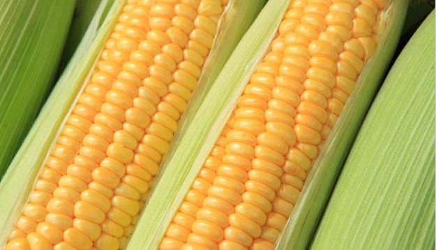 2019年03月16日全国各省玉米价格及行情走势报价表